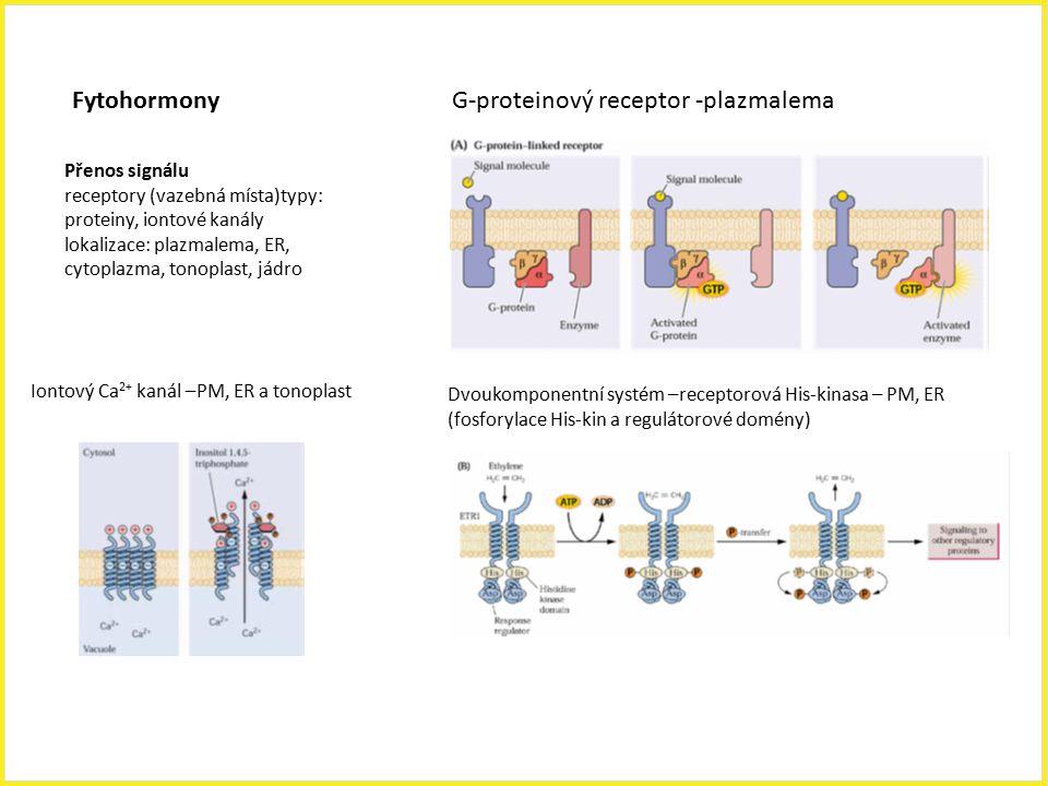 G-proteinový receptor -plazmalema Dvoukomponentní systém –receptorová His-kinasa – PM, ER (fosforylace His-kin a regulátorové domény) Přenos signálu r