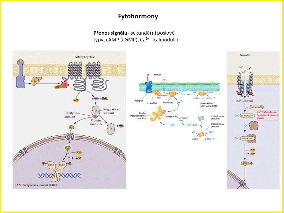 Přenos signálu - sekundární poslové typy: cAMP (cGMP), Ca 2+ - kalmodulin Fytohormony