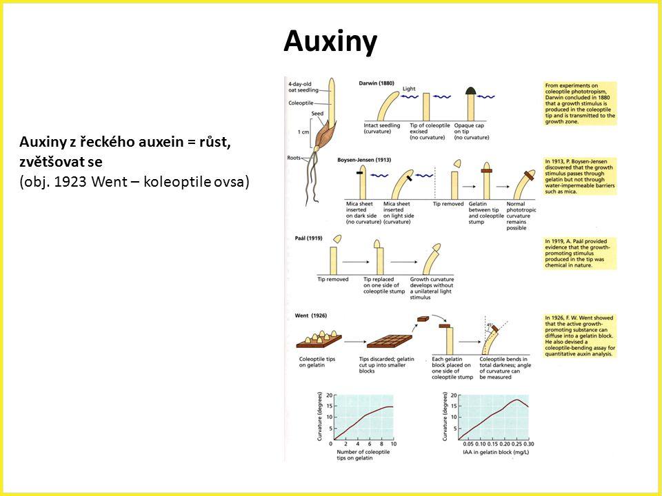 Auxiny Auxiny z řeckého auxein = růst, zvětšovat se (obj. 1923 Went – koleoptile ovsa)
