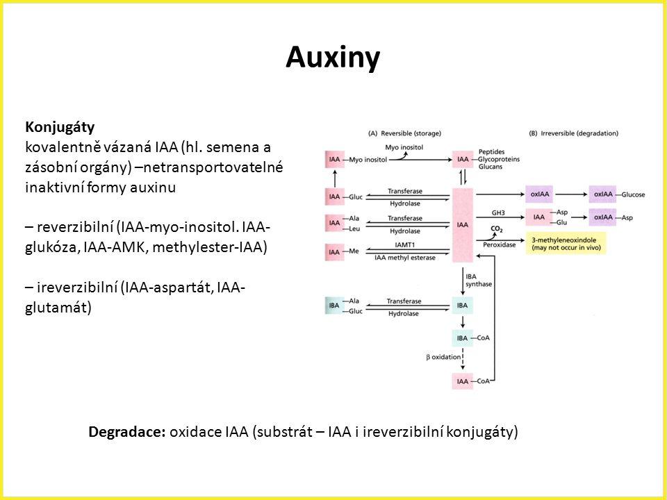 Auxiny Konjugáty kovalentně vázaná IAA (hl. semena a zásobní orgány) –netransportovatelné inaktivní formy auxinu – reverzibilní (IAA-myo-inositol. IAA