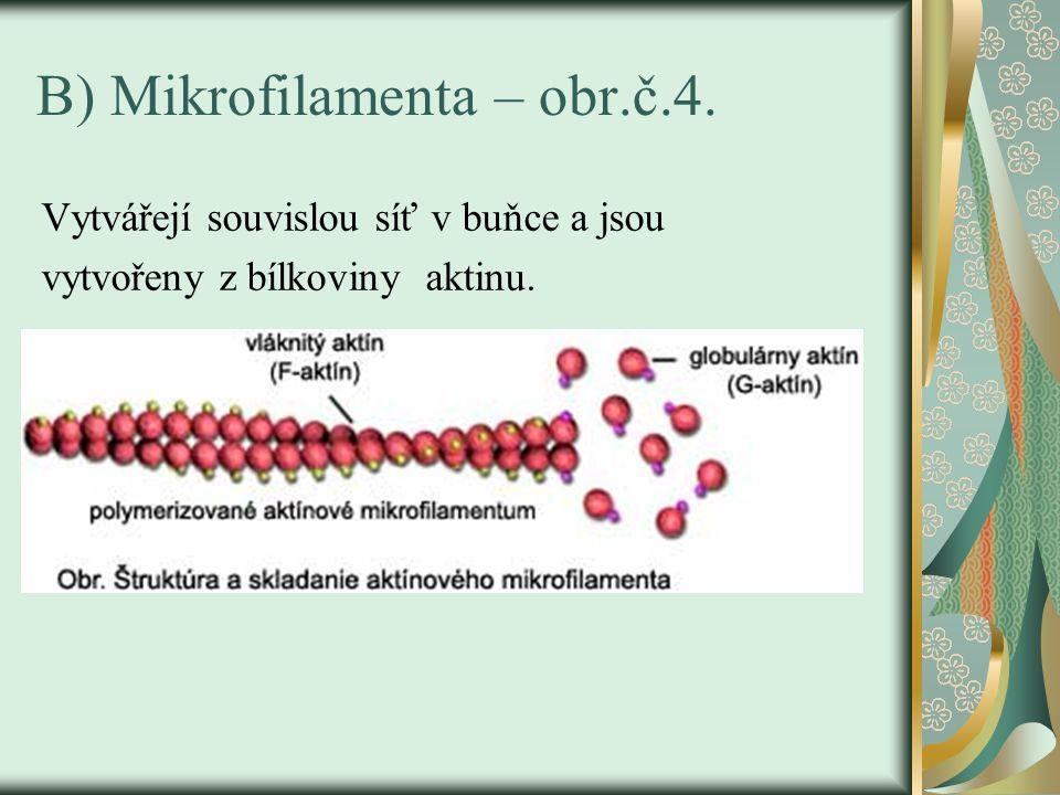 B) Mikrofilamenta – obr.č.4. Vytvářejí souvislou síť v buňce a jsou vytvořeny z bílkoviny aktinu.