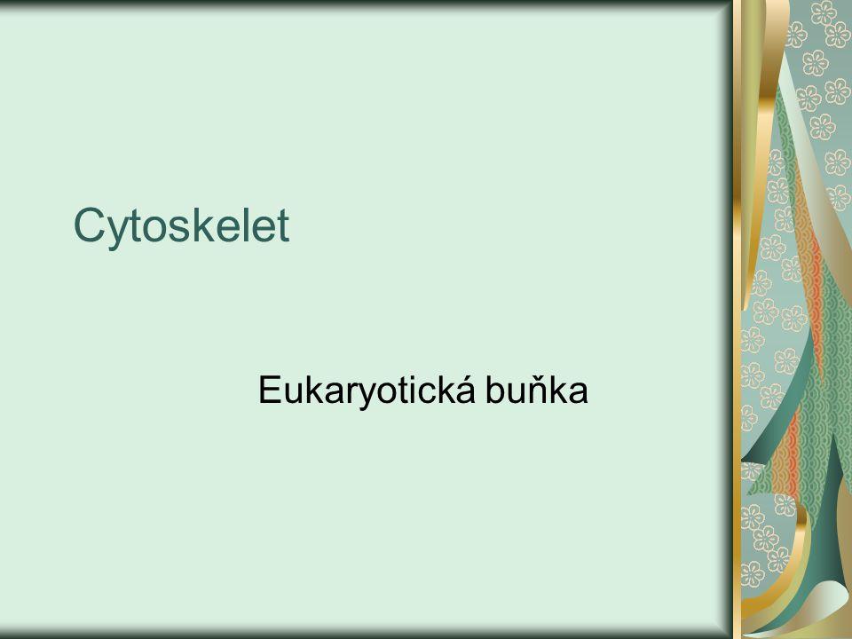 Co je to cytoskelet a k čemu je potřebný.