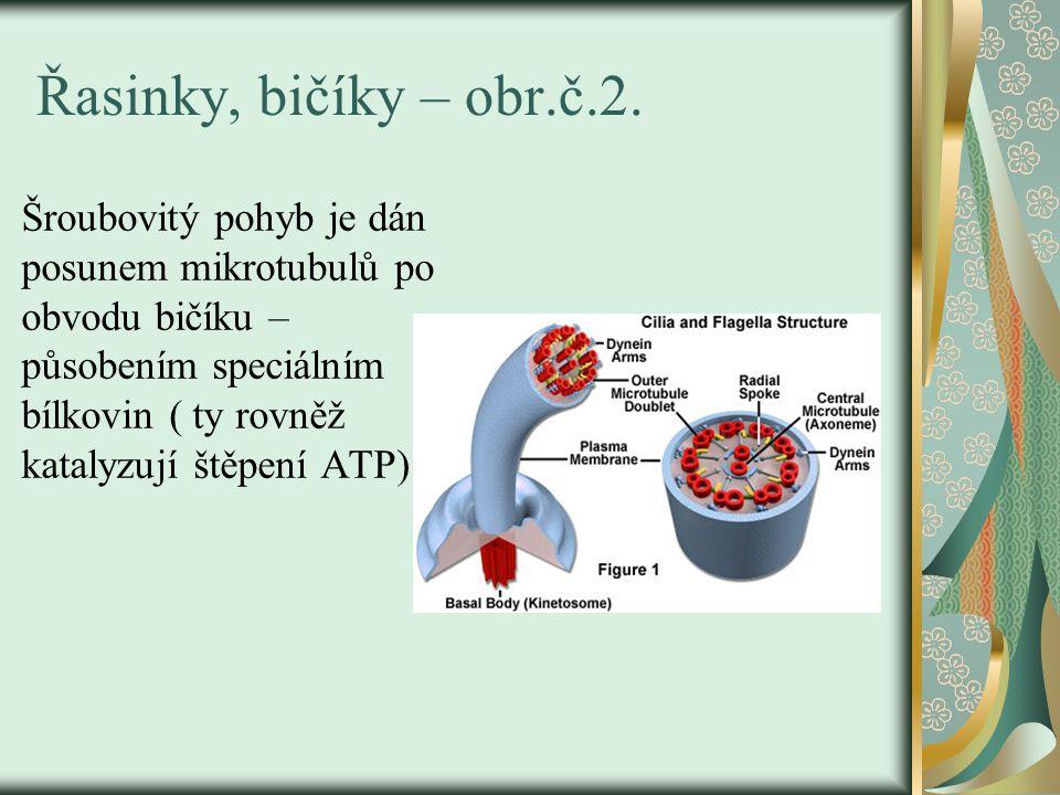 Řasinky, bičíky – obr.č.2. Šroubovitý pohyb je dán posunem mikrotubulů po obvodu bičíku – působením speciálním bílkovin ( ty rovněž katalyzují štěpení