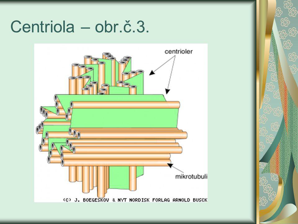 Centrozóm - nachází se uprostřed buňky a obsahuje 2 centrioly, které jsou obalené rosolovitou centrosfére, ze které při mitóze vybíhají mikrotubuly.