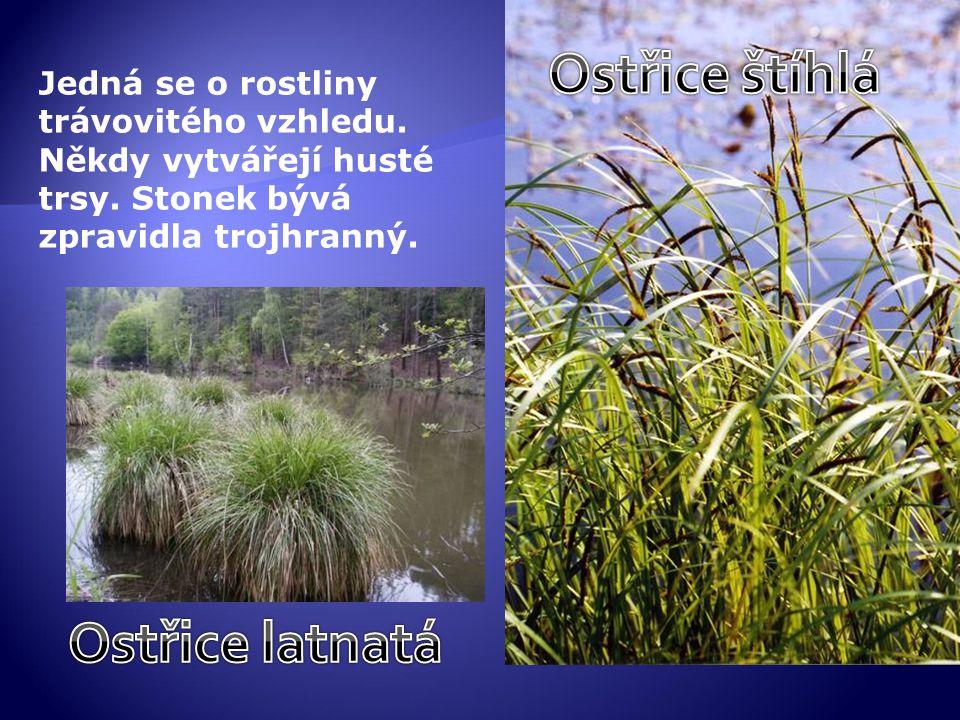 Jedná se o rostliny trávovitého vzhledu. Někdy vytvářejí husté trsy. Stonek bývá zpravidla trojhranný.