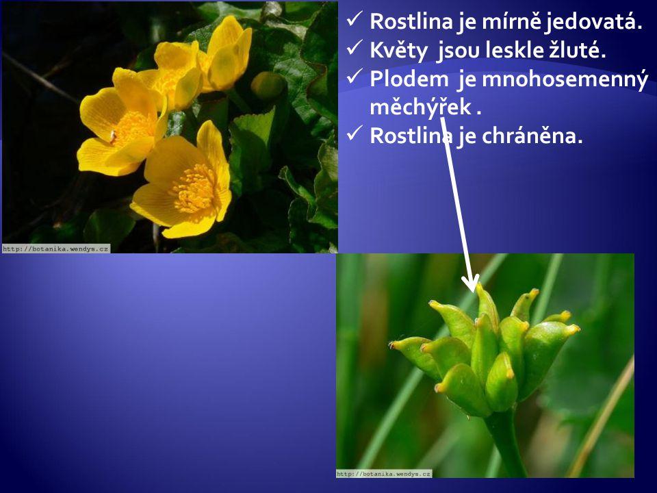 Rostlina je mírně jedovatá. Květy jsou leskle žluté. Plodem je mnohosemenný měchýřek. Rostlina je chráněna.