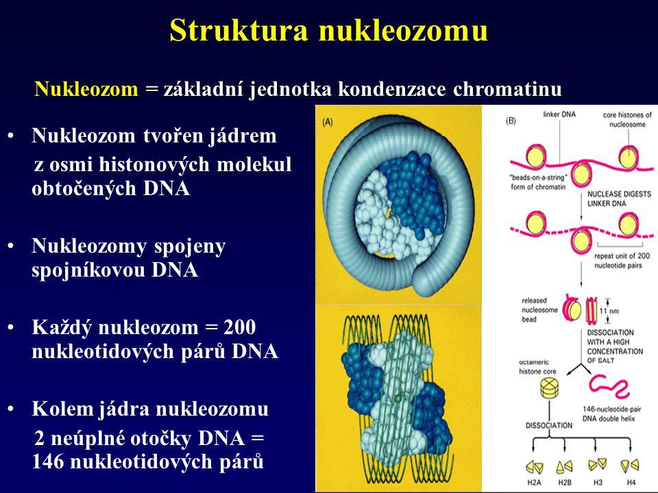 Struktura nukleozomu Nukleozom tvořen jádrem z osmi histonových molekul obtočených DNA Nukleozomy spojeny spojníkovou DNA Každý nukleozom = 200 nukleo