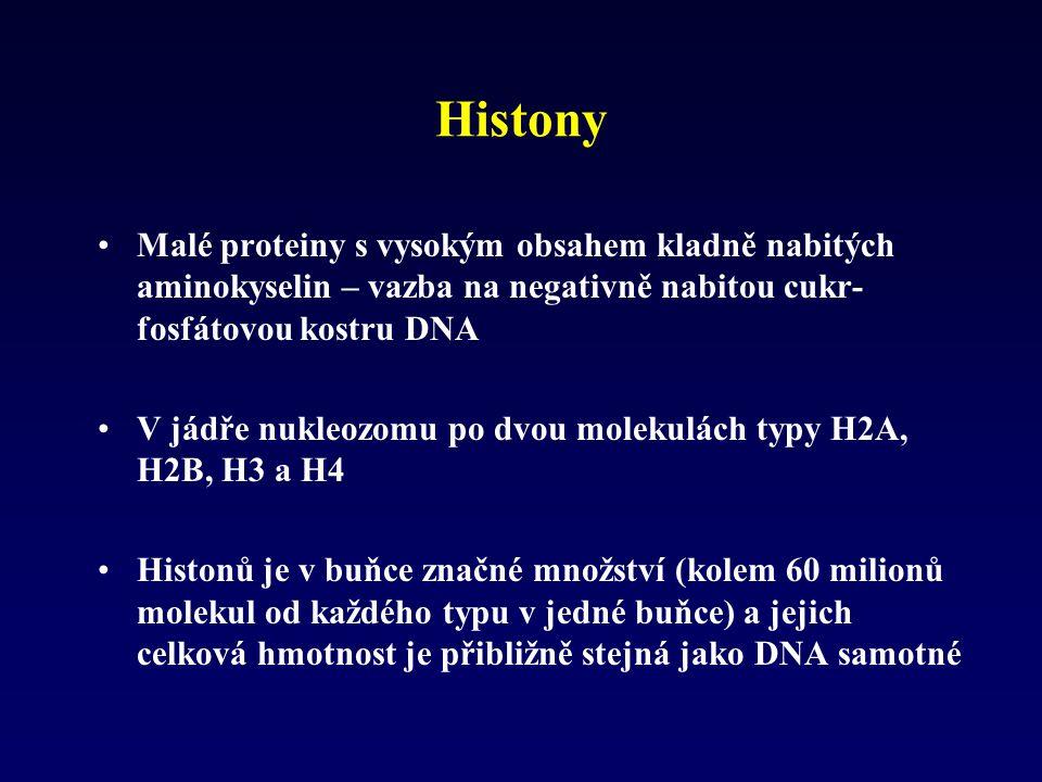 Histony Malé proteiny s vysokým obsahem kladně nabitých aminokyselin – vazba na negativně nabitou cukr- fosfátovou kostru DNA V jádře nukleozomu po dv