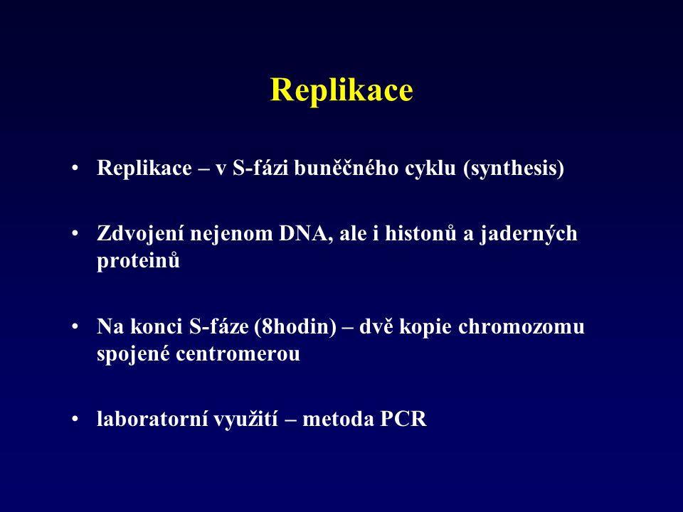 Replikace Replikace – v S-fázi buněčného cyklu (synthesis) Zdvojení nejenom DNA, ale i histonů a jaderných proteinů Na konci S-fáze (8hodin) – dvě kop