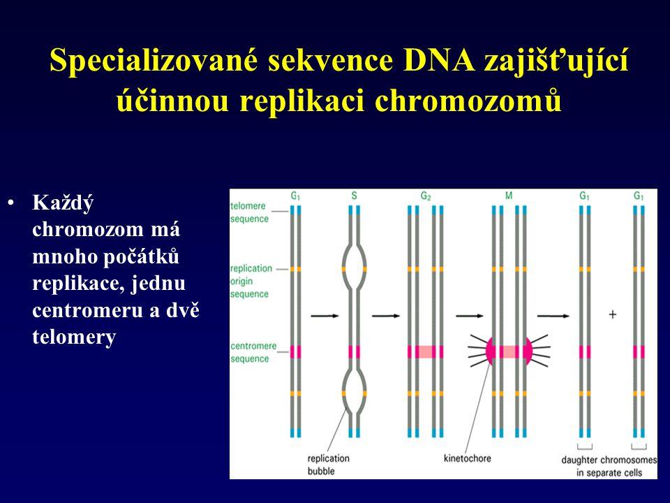 Specializované sekvence DNA zajišťující účinnou replikaci chromozomů Každý chromozom má mnoho počátků replikace, jednu centromeru a dvě telomery