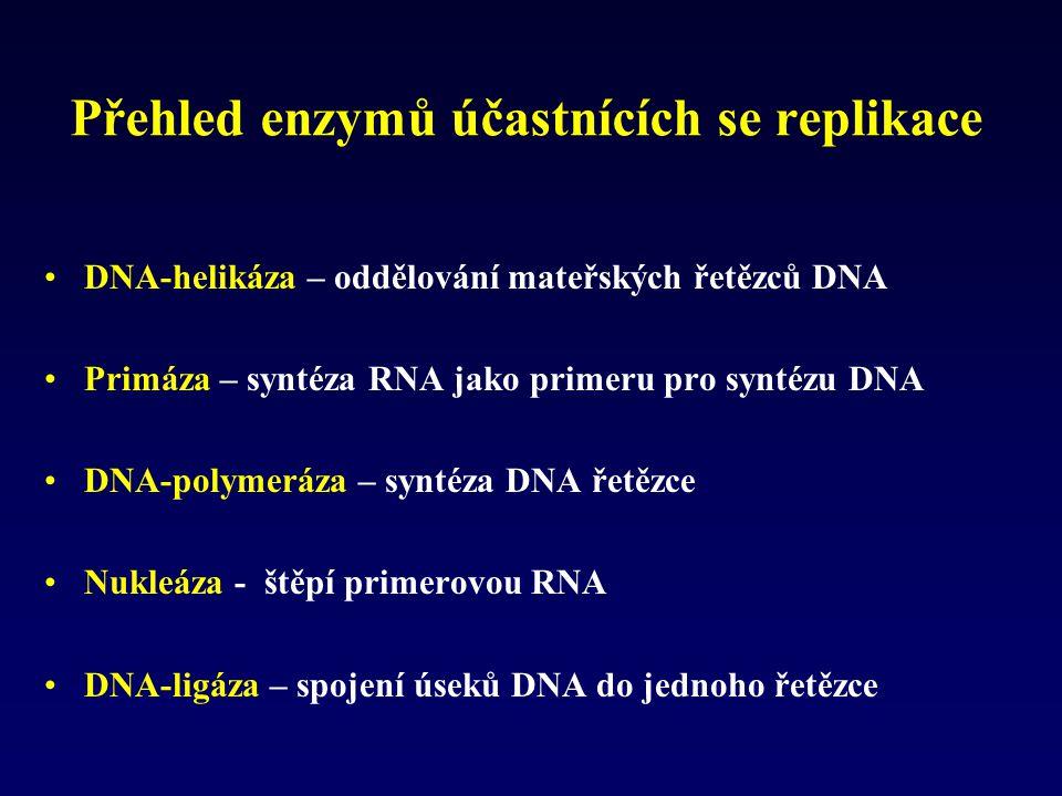 Přehled enzymů účastnících se replikace DNA-helikáza – oddělování mateřských řetězců DNA Primáza – syntéza RNA jako primeru pro syntézu DNA DNA-polyme