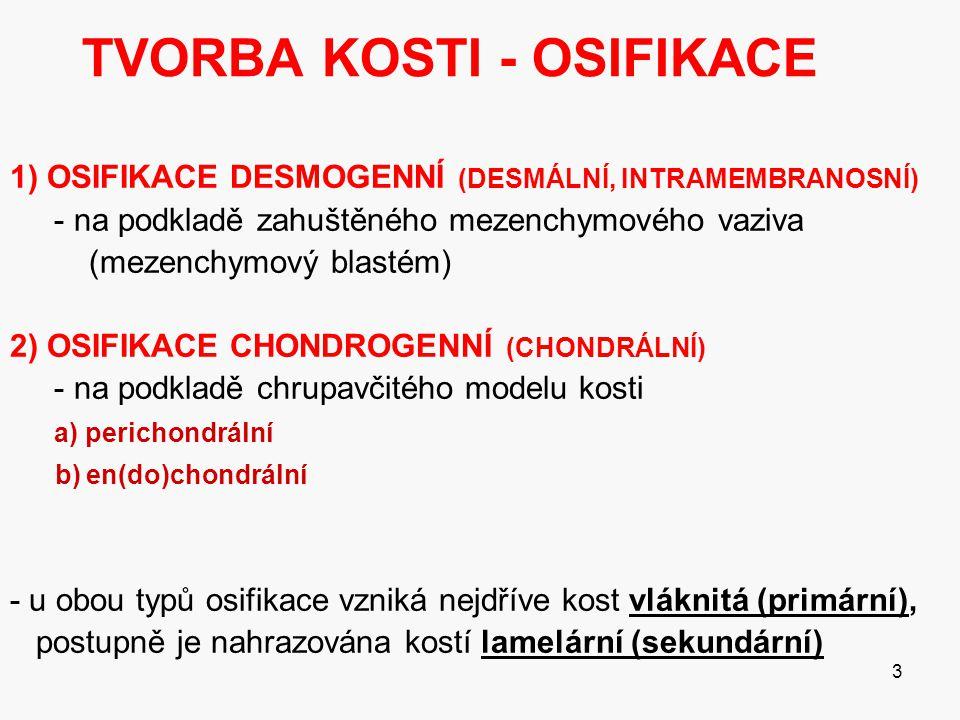 3 TVORBA KOSTI - OSIFIKACE 1) OSIFIKACE DESMOGENNÍ (DESMÁLNÍ, INTRAMEMBRANOSNÍ) - na podkladě zahuštěného mezenchymového vaziva (mezenchymový blastém) 2) OSIFIKACE CHONDROGENNÍ (CHONDRÁLNÍ) - na podkladě chrupavčitého modelu kosti a) perichondrální b) en(do)chondrální - u obou typů osifikace vzniká nejdříve kost vláknitá (primární), postupně je nahrazována kostí lamelární (sekundární)