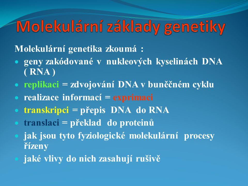  Molekulární genetika je genetika na úrovni molekul  Genetická informace = informace pro syntézu bílkovin  Proteinová skladba buněk = základ morfologických i funkčních znaků  Parametry proteinů jsou řízeny nukleovými kyselinami DNA, RNA  Nukleové kyseliny nesou genetické informace
