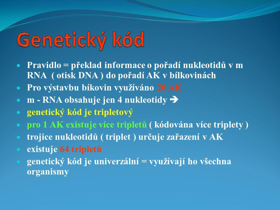  Pravidlo = překlad informace o pořadí nukleotidů v m RNA ( otisk DNA ) do pořadí AK v bílkovinách  Pro výstavbu bíkovin využíváno 20 AK  m - RNA o