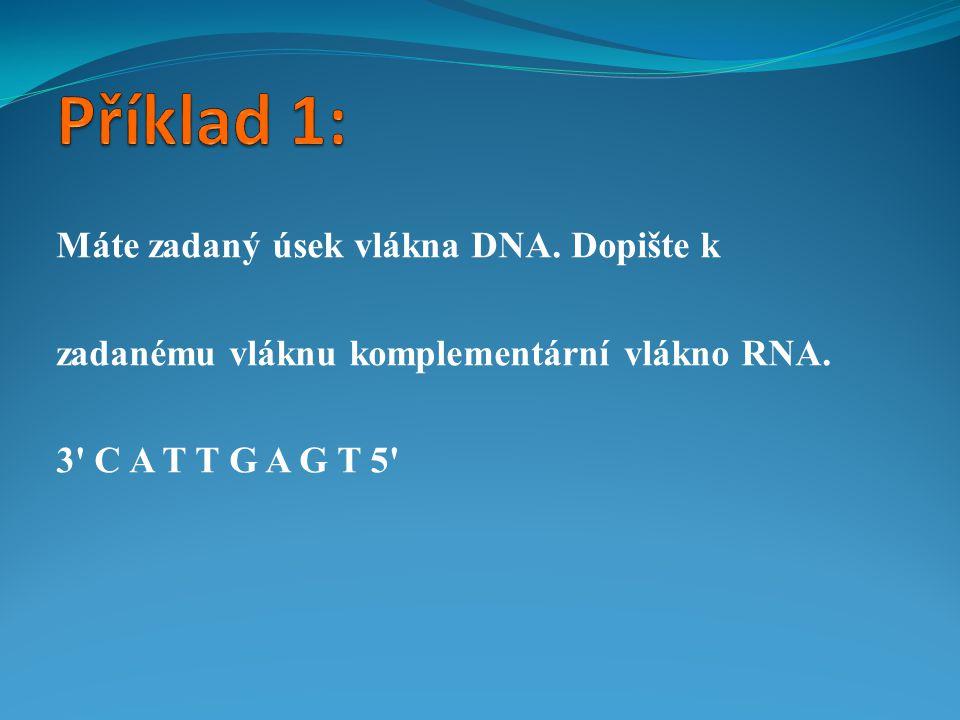 Máte zadaný úsek vlákna DNA. Dopište k zadanému vláknu komplementární vlákno RNA. 3' C A T T G A G T 5'