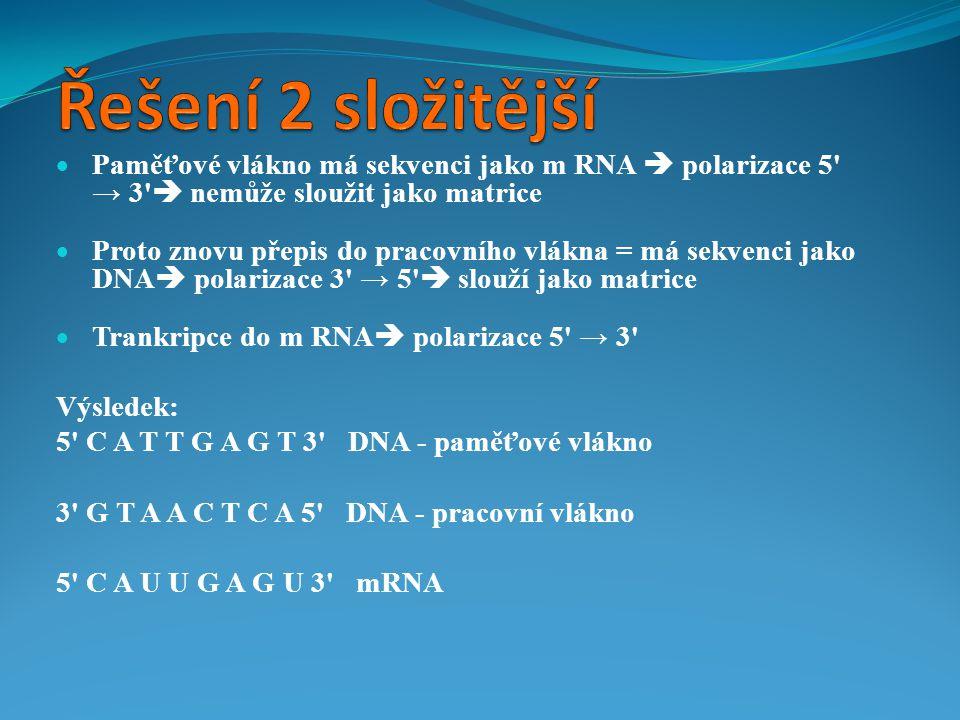  Paměťové vlákno má sekvenci jako m RNA  polarizace 5' → 3'  nemůže sloužit jako matrice  Proto znovu přepis do pracovního vlákna = má sekvenci ja