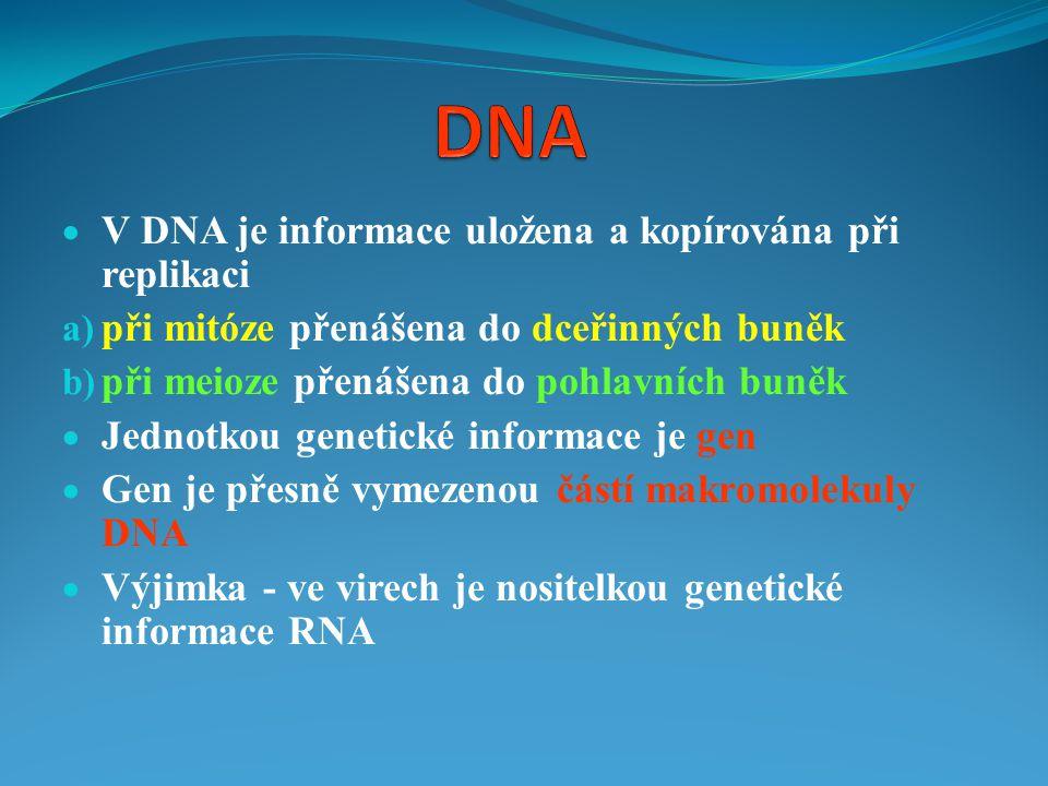  V DNA je informace uložena a kopírována při replikaci a) při mitóze přenášena do dceřinných buněk b) při meioze přenášena do pohlavních buněk  Jedn