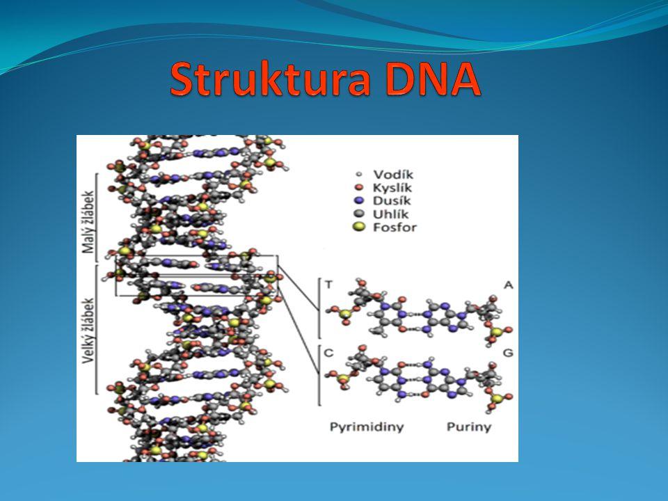  1 polynukleotidový řetězec stočený do spirály = jednoduchá šroubovice  typy RNA se prostorově od sebe liší  základní stavební jednotkou = nukleotid 1.