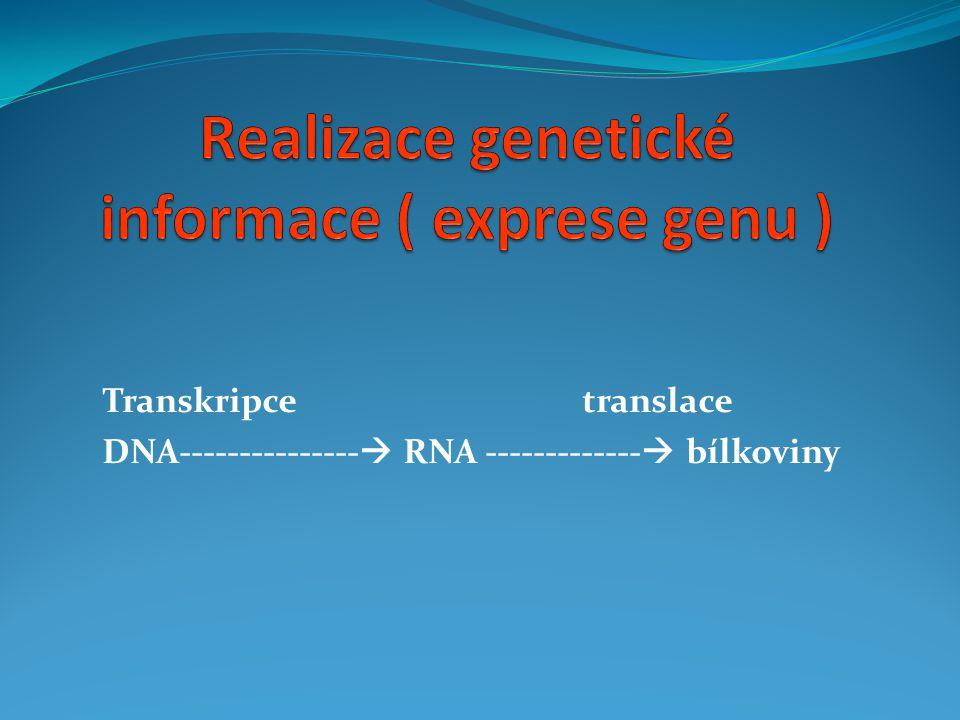  zdvojení existující molekuly DNA = reduplikace = syntéza DNA = vytvoření kopie DNA  šíří se oběma směry  probíhá v jádře buňky  kopírování genetické informace, umožňuje přenos z generace na generaci  replikace DNA  následuje dělení buňky  začíná na mnoha místech současně (u Eukaryot)  Začíná na jednom místě kruhové DNA ( u Prokaryot )  Vzor = matrice pro nová vlákna = mateřská molekula DNA  Nová molekula DNA = jeden řetězec z původní DNA + jeden nový syntetizovaný