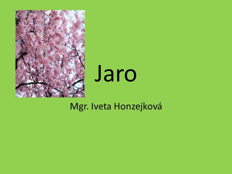 Jaro Mgr. Iveta Honzejková