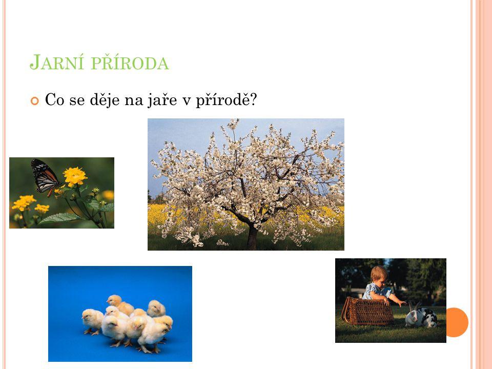 Rozkvétají první květiny.Kvetou stromy. Zvířata se budí ze zimního spánku.