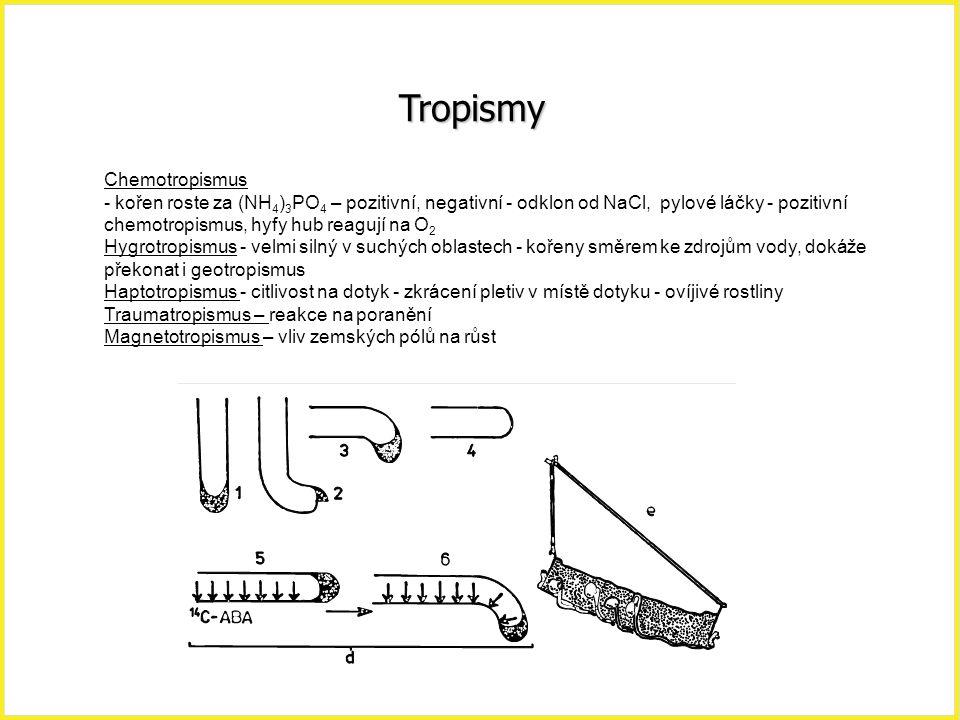 Tropismy Chemotropismus - kořen roste za (NH 4 ) 3 PO 4 – pozitivní, negativní - odklon od NaCl, pylové láčky - pozitivní chemotropismus, hyfy hub rea