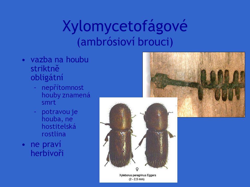 Xylomycetofágové (ambrósioví brouci) vazba na houbu striktně obligátní –nepřítomnost houby znamená smrt –potravou je houba, ne hostitelská rostlina ne