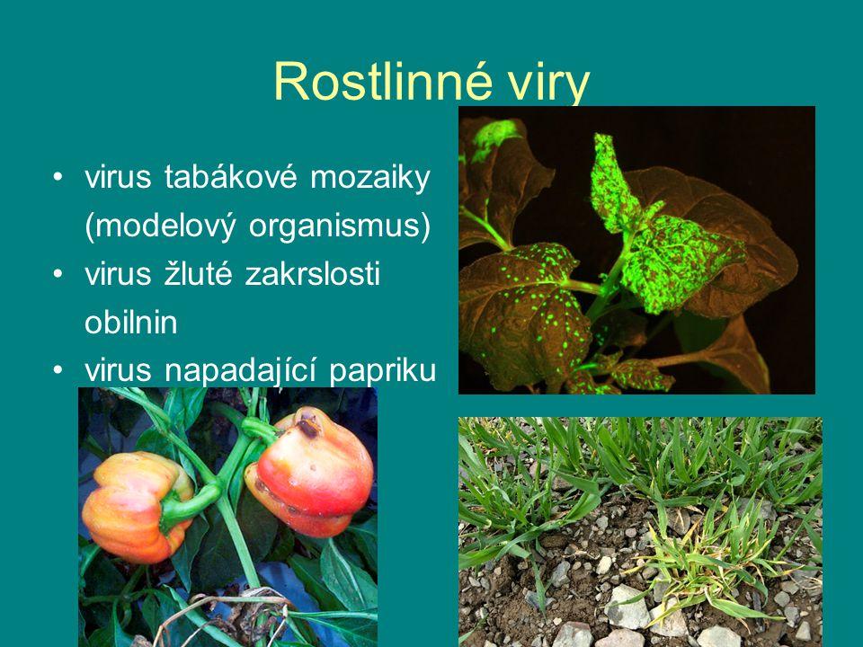 Rostlinné viry virus tabákové mozaiky (modelový organismus) virus žluté zakrslosti obilnin virus napadající papriku