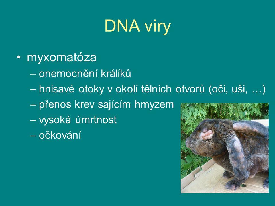 DNA viry myxomatóza –onemocnění králíků –hnisavé otoky v okolí tělních otvorů (oči, uši, …) –přenos krev sajícím hmyzem –vysoká úmrtnost –očkování