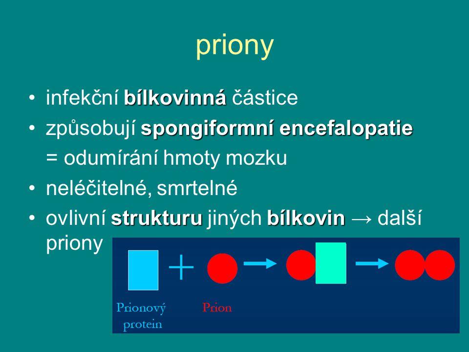 priony bílkovinnáinfekční bílkovinná částice spongiformníencefalopatiezpůsobují spongiformní encefalopatie = odumírání hmoty mozku neléčitelné, smrtel