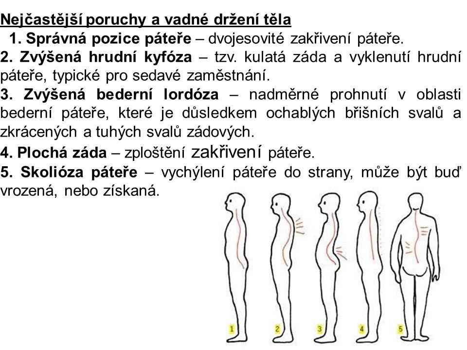 Nejčastější poruchy a vadné držení těla 1. Správná pozice páteře – dvojesovité zakřivení páteře. 2. Zvýšená hrudní kyfóza – tzv. kulatá záda a vyklenu