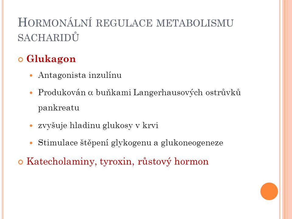 H ORMONÁLNÍ REGULACE METABOLISMU SACHARIDŮ Glukagon Antagonista inzulínu Produkován  buňkami Langerhausových ostrůvků pankreatu zvyšuje hladinu glukosy v krvi Stimulace štěpení glykogenu a glukoneogeneze Katecholaminy, tyroxin, růstový hormon