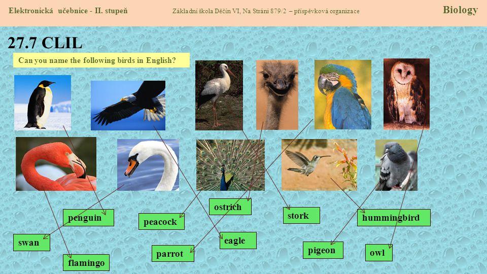 27.7 CLIL Elektronická učebnice - II. stupeň Základní škola Děčín VI, Na Stráni 879/2 – příspěvková organizace Biology Can you name the following bird