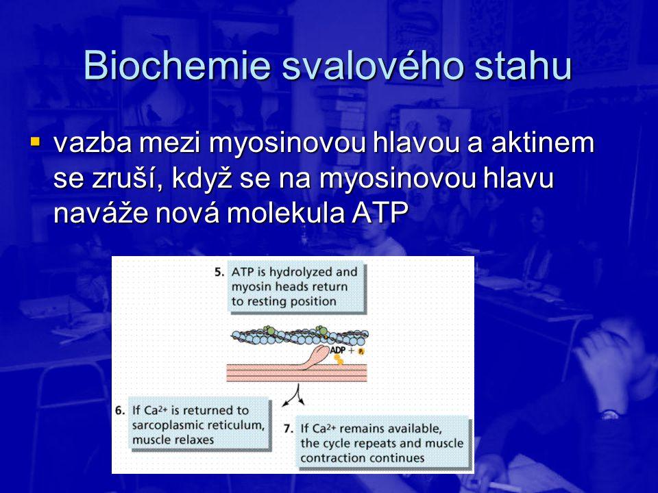  vazba mezi myosinovou hlavou a aktinem se zruší, když se na myosinovou hlavu naváže nová molekula ATP