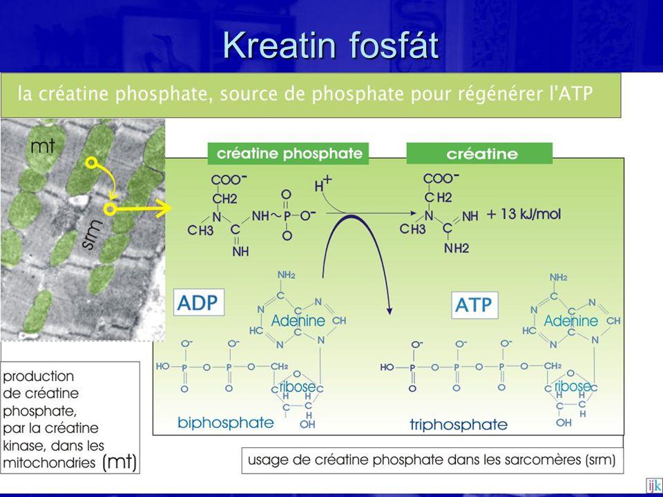 Kreatin fosfát