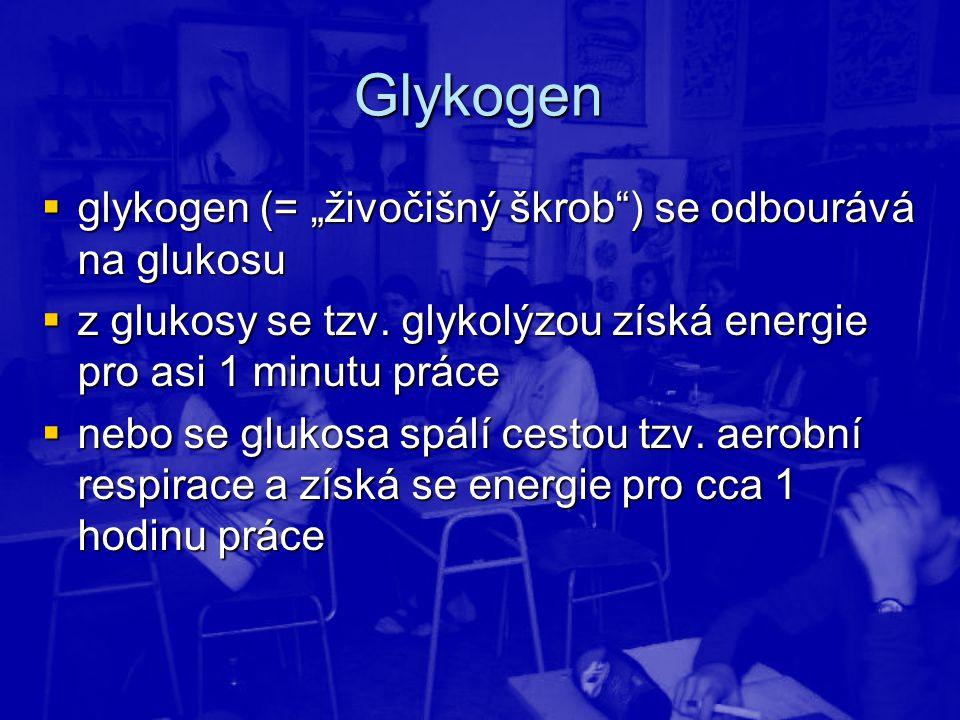 """Glykogen  glykogen (= """"živočišný škrob"""") se odbourává na glukosu  z glukosy se tzv. glykolýzou získá energie pro asi 1 minutu práce  nebo se glukos"""