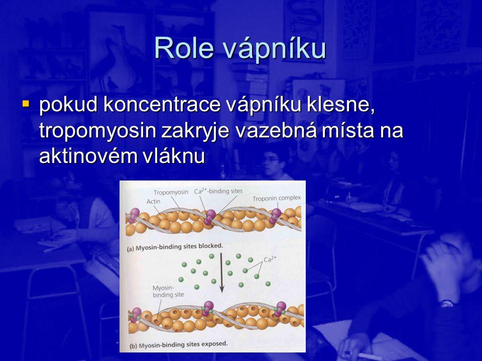 Role vápníku  pokud koncentrace vápníku klesne, tropomyosin zakryje vazebná místa na aktinovém vláknu