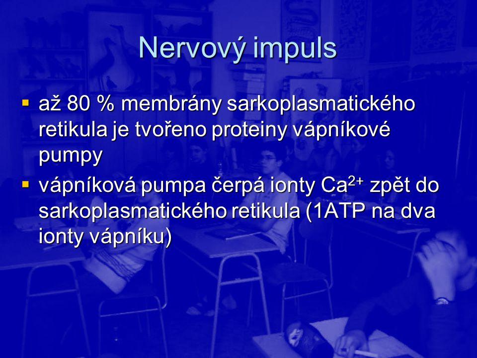 Nervový impuls  až 80 % membrány sarkoplasmatického retikula je tvořeno proteiny vápníkové pumpy  vápníková pumpa čerpá ionty Ca 2+ zpět do sarkopla