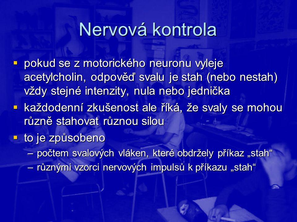 Nervová kontrola  pokud se z motorického neuronu vyleje acetylcholin, odpověď svalu je stah (nebo nestah) vždy stejné intenzity, nula nebo jednička 