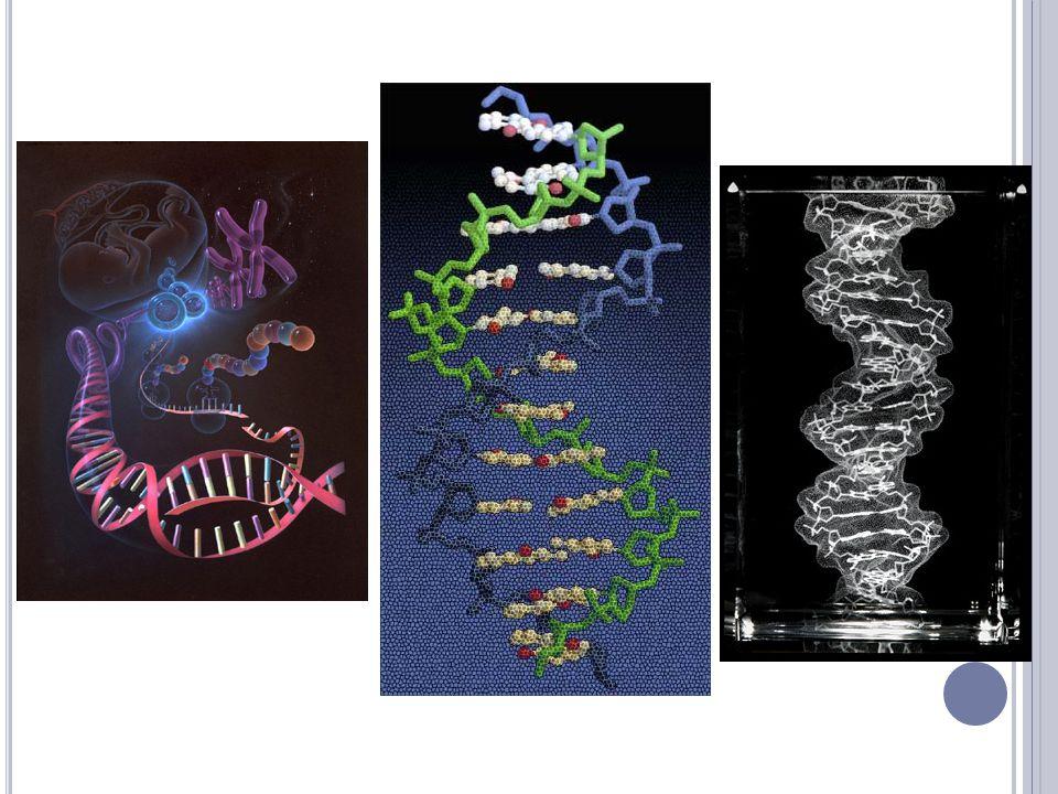 DVA METRY DNA V KAŽDÉ BUŇCE Epigenetické změny,tedy obaly jednotlivých genů,vysvětlují některé záhady.Jednou z nich jsou rozdíly v dědičných vlastnostech u jednovaječných dvojčat.Tito sourozenci mají úplně totožnou dědičnou informaci,a přesto se mohou lišit dědičným sklonem k rakovině,duševním chorobám a dalším neduhům.Jak to.
