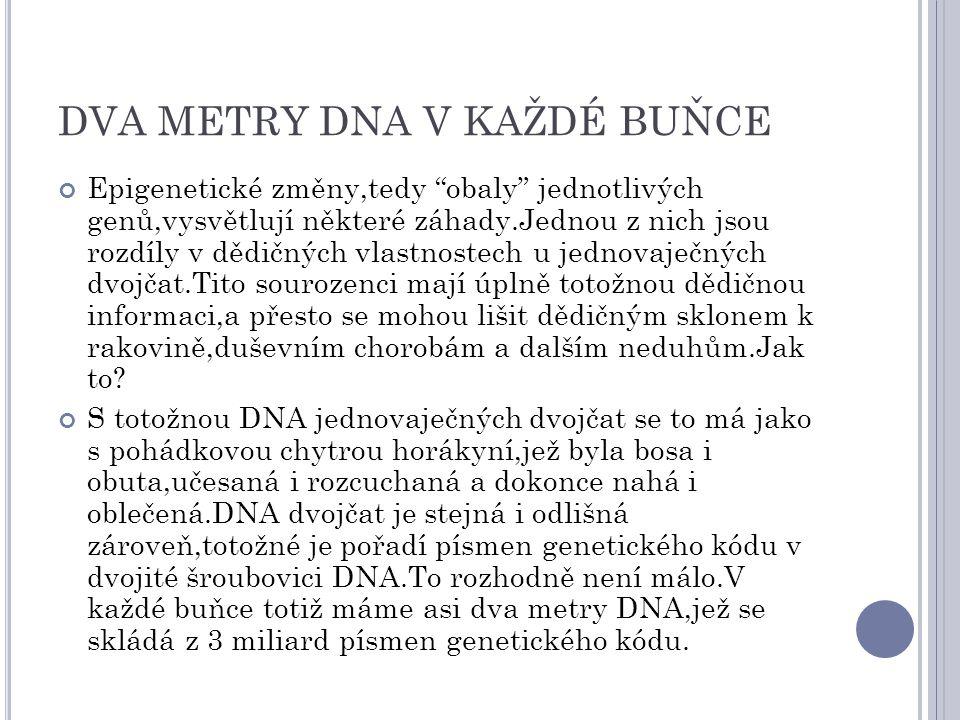 """DVA METRY DNA V KAŽDÉ BUŇCE Epigenetické změny,tedy """"obaly"""" jednotlivých genů,vysvětlují některé záhady.Jednou z nich jsou rozdíly v dědičných vlastno"""