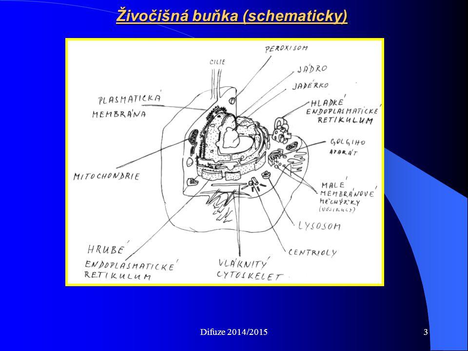 Živočišná buňka (schematicky) Difuze 2014/20153