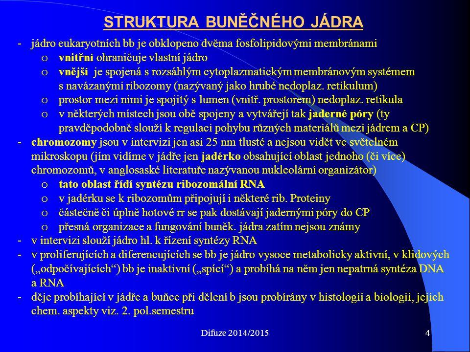 STRUKTURA BUNĚČNÉHO JÁDRA -jádro eukaryotních bb je obklopeno dvěma fosfolipidovými membránami o vnitřní ohraničuje vlastní jádro o vnější je spojená s rozsáhlým cytoplazmatickým membránovým systémem s navázanými ribozomy (nazývaný jako hrubé nedoplaz.