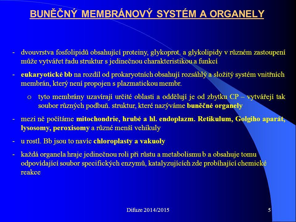 BUNĚČNÝ MEMBRÁNOVÝ SYSTÉM A ORGANELY -dvouvrstva fosfolipidů obsahující proteiny, glykoprot.
