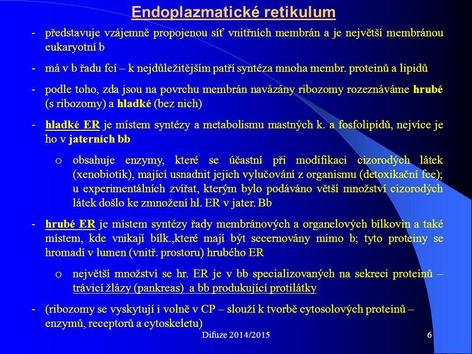 Endoplazmatické retikulum -představuje vzájemně propojenou síť vnitřních membrán a je největší membránou eukaryotní b -má v b řadu fcí – k nejdůležitějším patří syntéza mnoha membr.