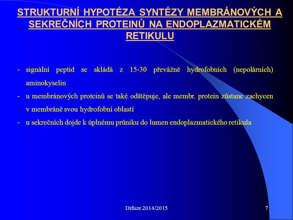 STRUKTURNÍ HYPOTÉZA SYNTÉZY MEMBRÁNOVÝCH A SEKREČNÍCH PROTEINŮ NA ENDOPLAZMATICKÉM RETIKULU -signální peptid se skládá z 15-30 převážně hydrofobních (nepolárních) aminokyselin -u membránových proteinů se také odštěpuje, ale membr.