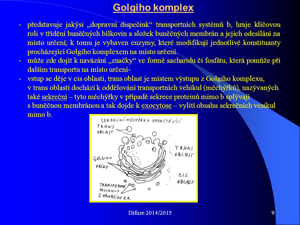 """Golgiho komplex -představuje jakýsi """"dopravní dispečink transportních systémů b, hraje klíčovou roli v třídění buněčných bílkovin a složek buněčných membrán a jejich odesílání na místo určení; k tomu je vybaven enzymy, které modifikují jednotlivé konstituanty procházející Golgiho komplexem na místo určení."""