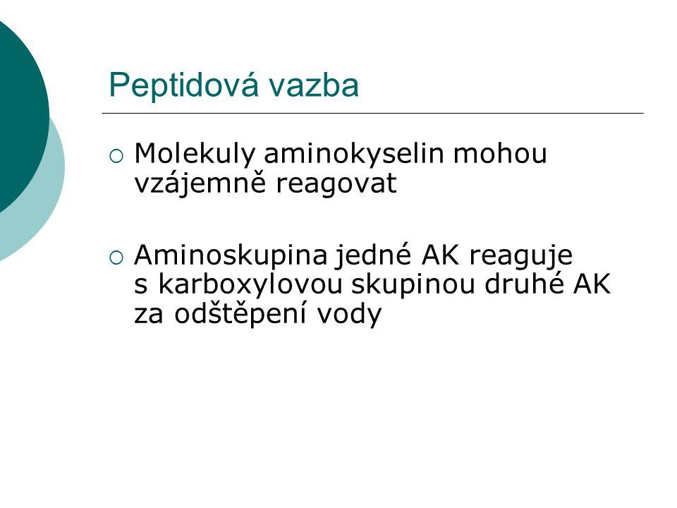 Peptidová vazba  Molekuly aminokyselin mohou vzájemně reagovat  Aminoskupina jedné AK reaguje s karboxylovou skupinou druhé AK za odštěpení vody