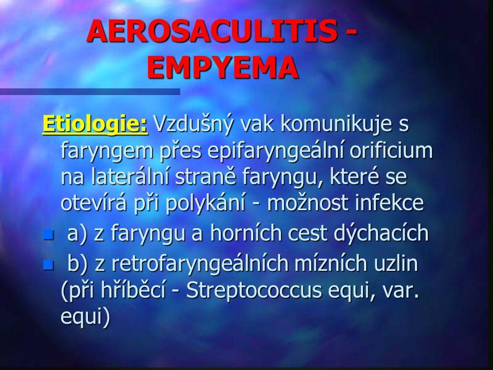 AEROSACULITIS - EMPYEMA Etiologie: Vzdušný vak komunikuje s faryngem přes epifaryngeální orificium na laterální straně faryngu, které se otevírá při polykání - možnost infekce n a) z faryngu a horních cest dýchacích n b) z retrofaryngeálních mízních uzlin (při hříběcí - Streptococcus equi, var.