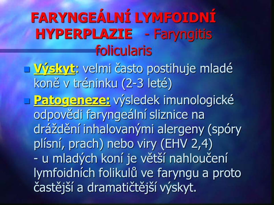 FARYNGEÁLNÍ LYMFOIDNÍ HYPERPLAZIE - Faryngitis folicularis n Výskyt: velmi často postihuje mladé koně v tréninku (2-3 leté) n Patogeneze: výsledek imunologické odpovědi faryngeální sliznice na dráždění inhalovanými alergeny (spóry plísní, prach) nebo viry (EHV 2,4) - u mladých koní je větší nahloučení lymfoidních folikulů ve faryngu a proto častější a dramatičtější výskyt.